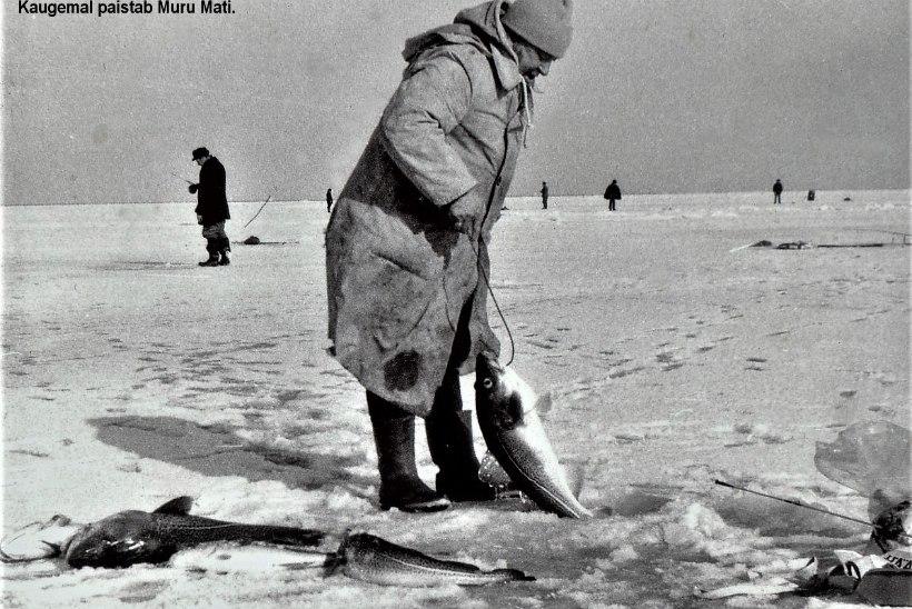 Veterankalamees Katenevi päevik 1982: siiad konfiskeeriti, trahvist pääsemiseks pidi miilitsate ja kalakaitseinspektoritega viina jooma