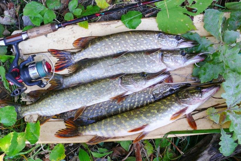 Vaata järele: alanud aasta toob kalastusse uued reeglid