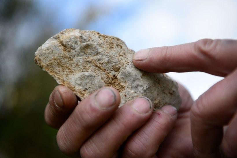 Tansaaniast leiti kahe miljoni aasta vanused tööriistad
