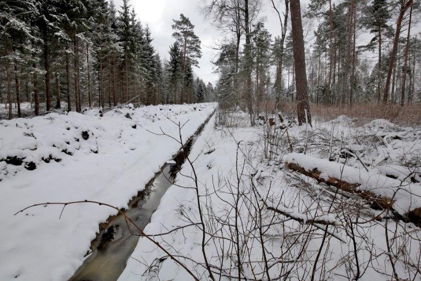 Keskkonnakirve sai Riigimetsa Majandamise Keskuse loodust kahjustav kuivendamine