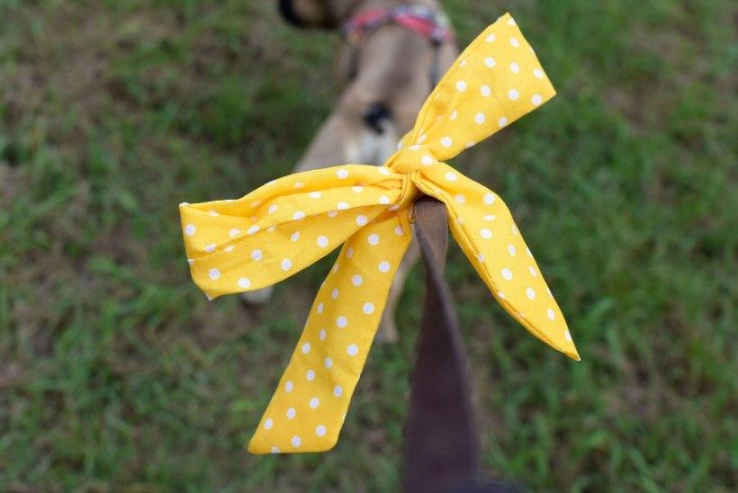 KAITSE OMA LEMMIKUT | Miks on mõne koera rihma küljes kollane lint?