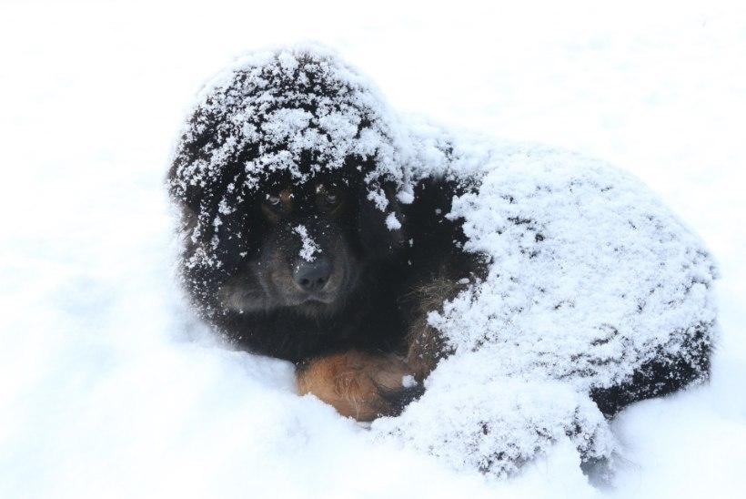 GALERII | Paks lumi ei sega ometi lõunauinakut