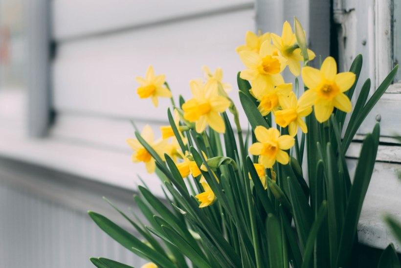 TALVINE AIAKALENDER | Millised aiatoimetused võiks veebruaris ette võtta?