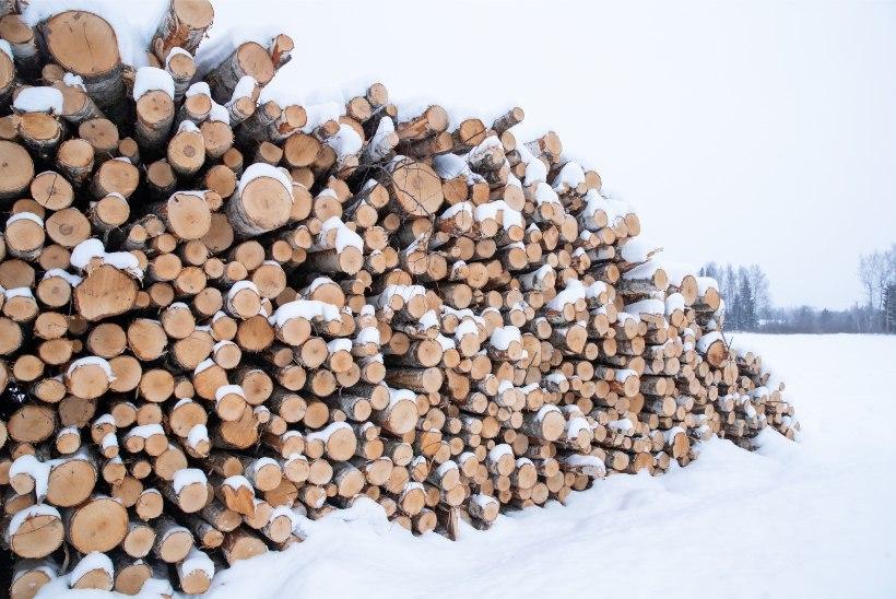 Küttepuude tootjad tänavuse talve üle ei kurda