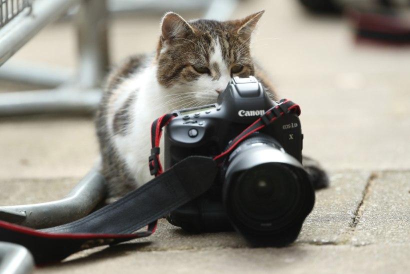 FOTOD   SUUR POLIITJUUBEL! Suurbritannia tähtsaim kass tähistab kümnendat tööaastat