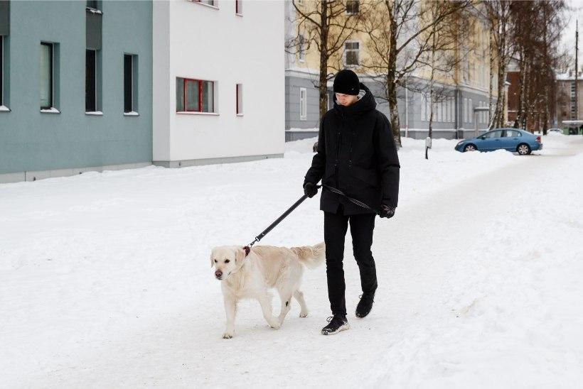 """KOERAOMANIKUD MARUS: """"Linnatänavad on nii ära soolatud, et koer hakkas jalutades niuksuma, nagu keegi oleks teda palgiga löönud, ja keeldus edasi liikumast!"""""""