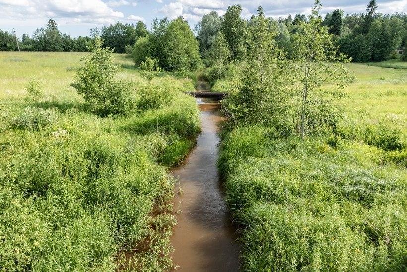 Eesti Kalastajate Selts: ulatuslikud kuivendussüsteemid mõjutavad meie veekogude loomulikku toimimist ja elurikkust
