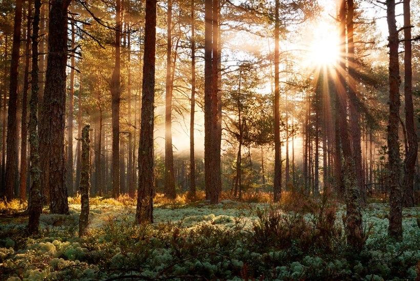 Kas tänapäeva inimese suhe loodusega läheb rappa?