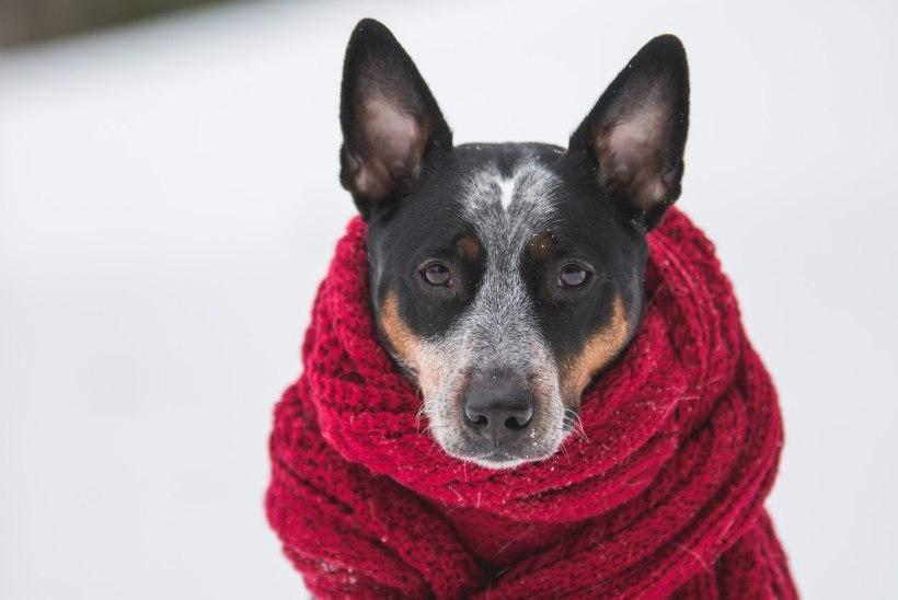 Kuidas hoida lemmiku tervist pikal talveperioodil?