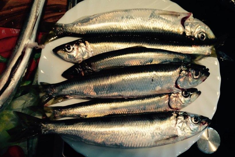 Vladislav Koržets: maitseomadustelt on räim ikka vapustavalt hea kala