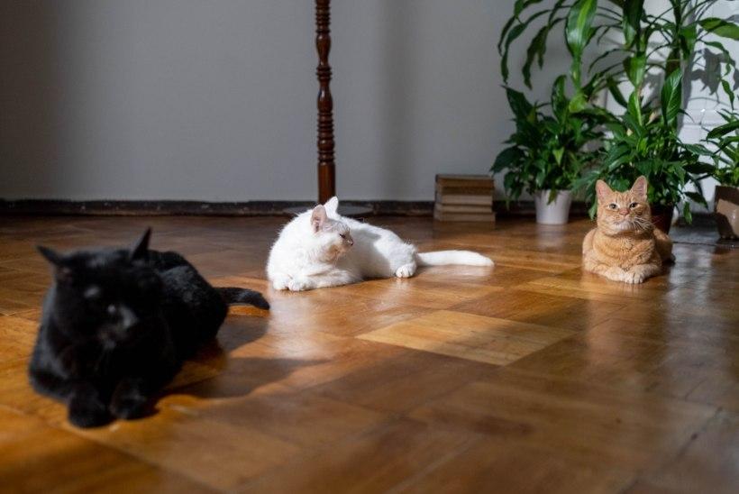 Põrandal on häiriv täke või koera küünejäljed? Häid soovitusi, kuidas lihtsate vahenditega iluvigu parandada