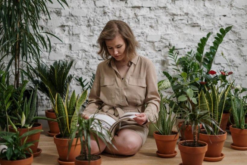 Toalille kasvataja soovib teada: levinumatele küsimustele vastab Jaan Mettik Tallinna botaanikaaiast