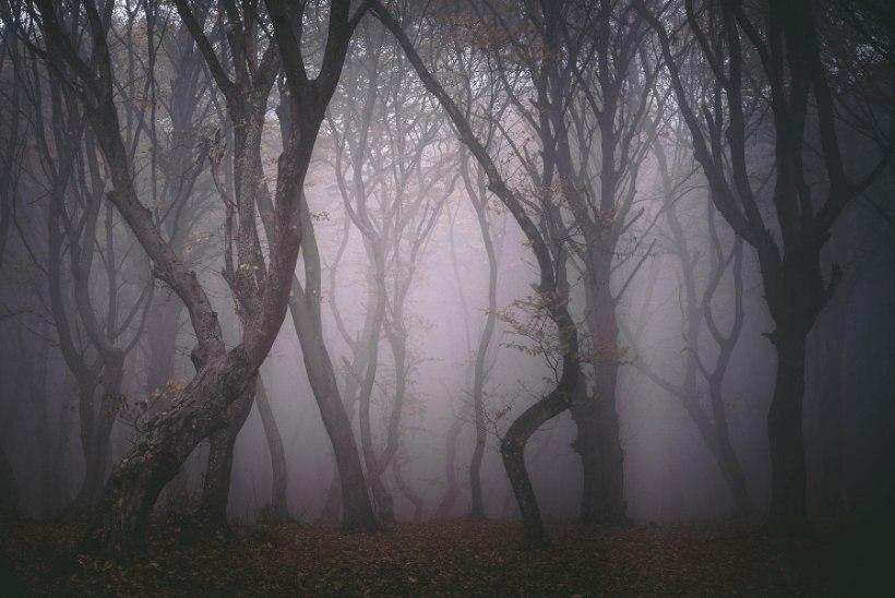 KEERDUS PUUD JA KADUMISED: kõheda Rumeenia metsa ümber ringleb palju veidraid lugusid