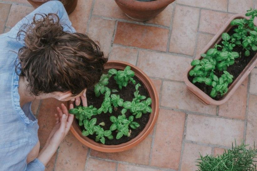 APRILLIKUU AIAMÄRKSÕNAD: säti rõdu kevadvormi, multši peenraid ja tee ise seemnelint!