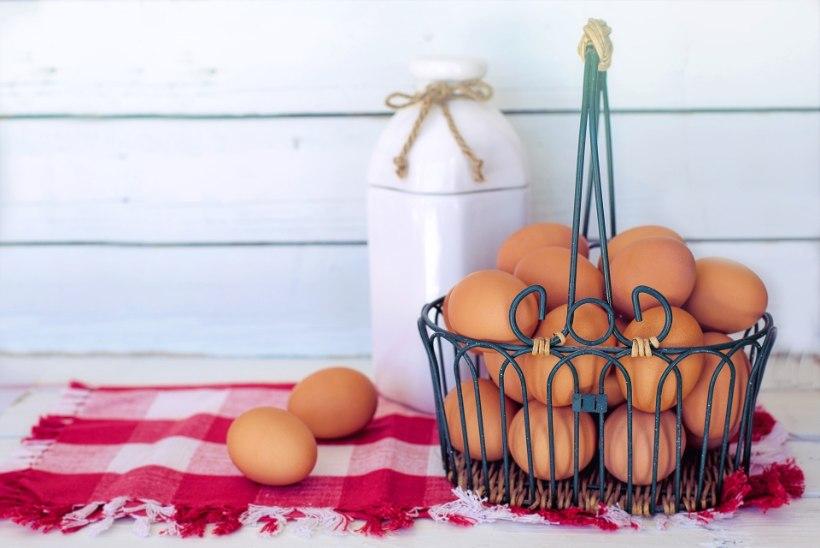 MITU MUNA PÄEVAS VÕIB SÜÜA? 6 tõde ja müüti munast