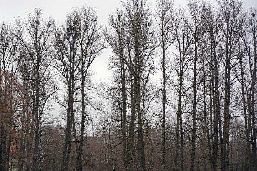 Toimetajalt | Argumenteeritud selgitus hajutab vandenõude udu