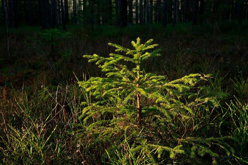 Metsauudiseid | Metsanduse uue arengukava panevad kokku teadlased