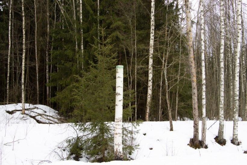 """Janno Simm: """"Metsaomanikuks olemine on kohustus looduse ja järeltulevate inimpõlvede ees."""""""