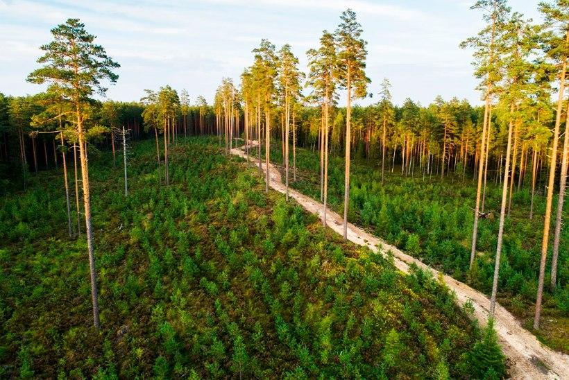 Kas Eestis on metsa liiga vähe, palju või piisavalt?