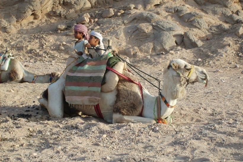 Koroonaajal Egiptusesse: jagub nii päikest kui ka paberite täitmist