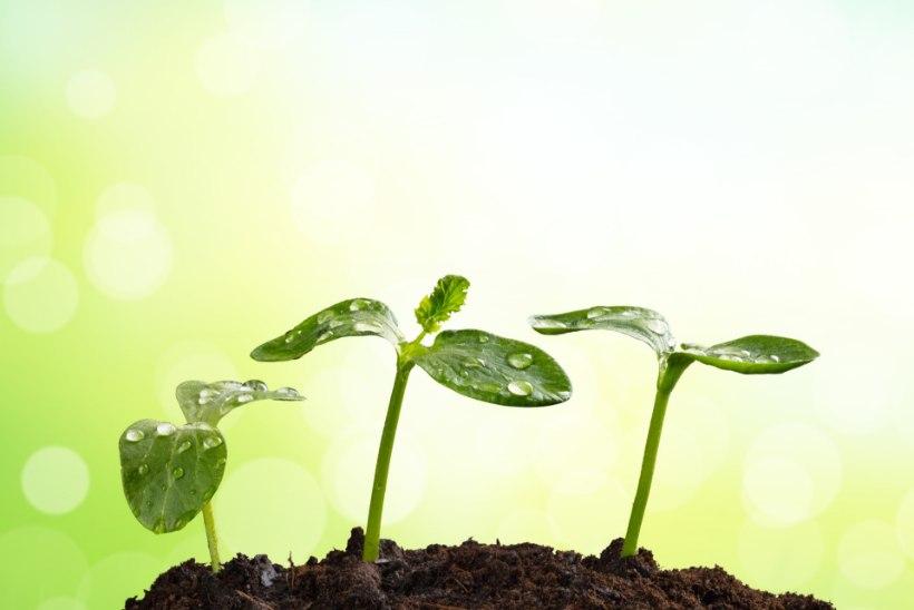 Ettekasvatamiseks vajalik! Minikasvuhoone on tubase aedniku aialapp