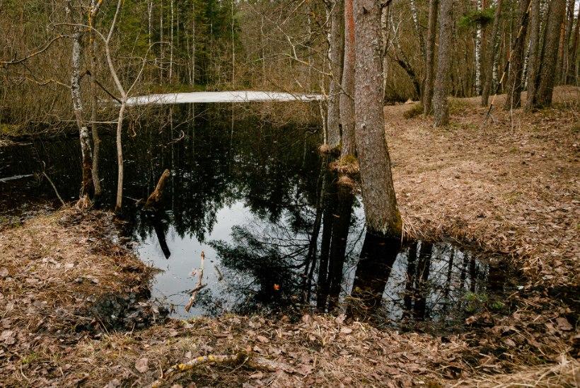 Ülevaade Põhja-Eesti matkaradadest: ketsid jalga ja metsa kevadet otsima