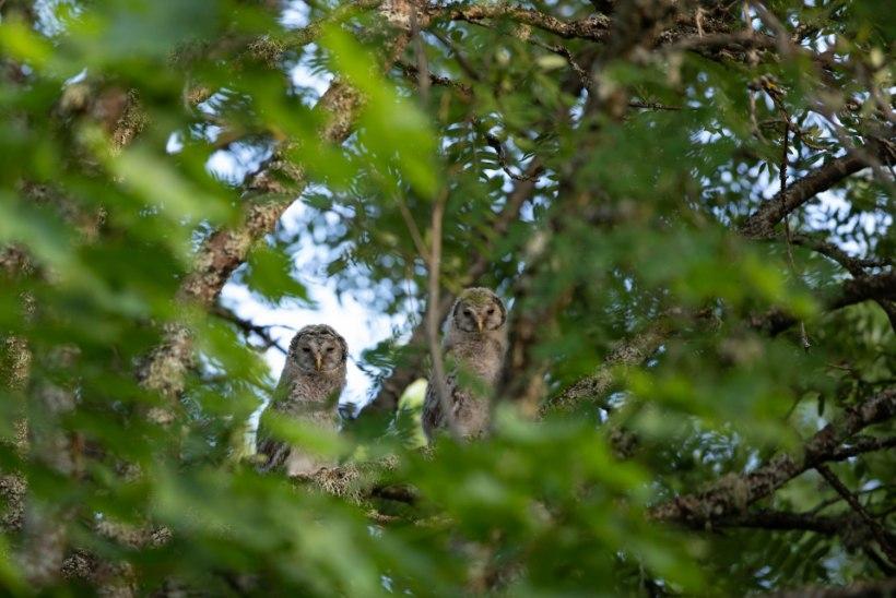Foto | Linnud, kes elavad puuõõntes