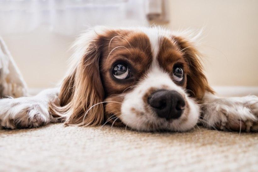 Koer vajab massaaži – täpselt nagu peremeeski