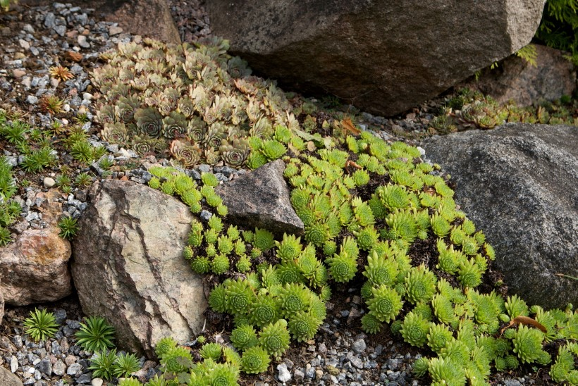 Minimõõtu iluaed ehk Mis imeasi on moldaed?