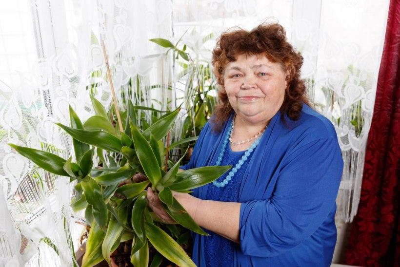 """Rakvere nõid Sirje Nukka: """"Iga taimega ei saa kõiki ühtemoodi ravitseda."""""""