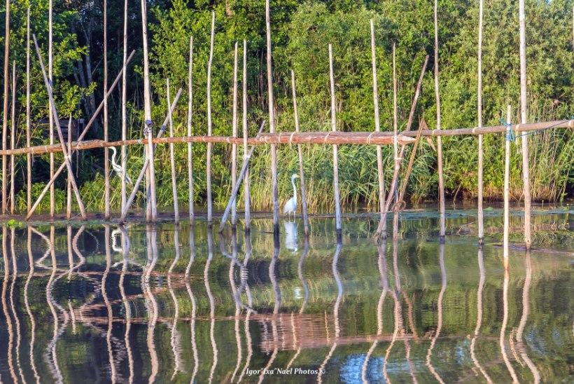 Eesti Kalastajate Seltsilt: aitab mõrdadest Emajõel