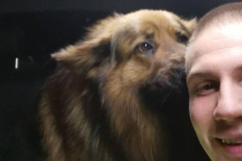Politseinikud päästsid maantee äärde eksinud koera