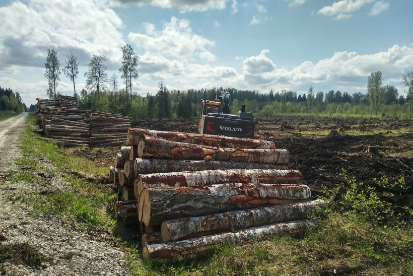 Raierahu ei kehti: metsloomaühing kogub õõvastavaid jäädvustusi