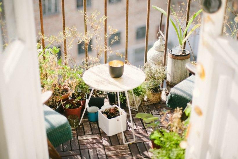 TEEME SELGEKS: mida pead teadma, kui plaanid rõdul või terrassil aiasaadusi kasvatada?