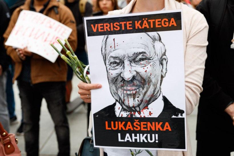 LUKAŠENKA POLIITILINE LÕPP PAISTAB? Eestis elavad valgevenelased: Euroopa viimane diktaator näitas, et ta on sõge