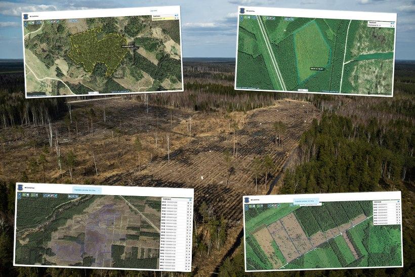 SUUR ANALÜÜS   PRAAK, AHNITSEMINE JA JOKK-SKEEMID: Eesti metsade elu löövad sassi koletusuured raiesmikud