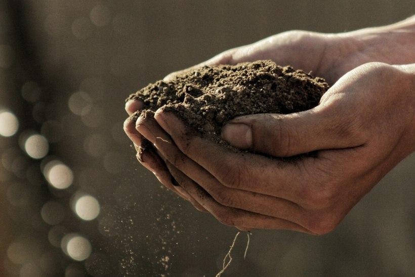 JUUNIKUU AIAMÄRKSÕNAD: võta kanad, tee ise mullaga teste, papipeenar ja taimeredel
