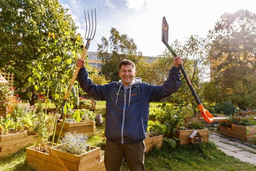 PEENRAD KESET LINNA: kortermajas elavad rohenäpud toimetavad kogukonnaaedades