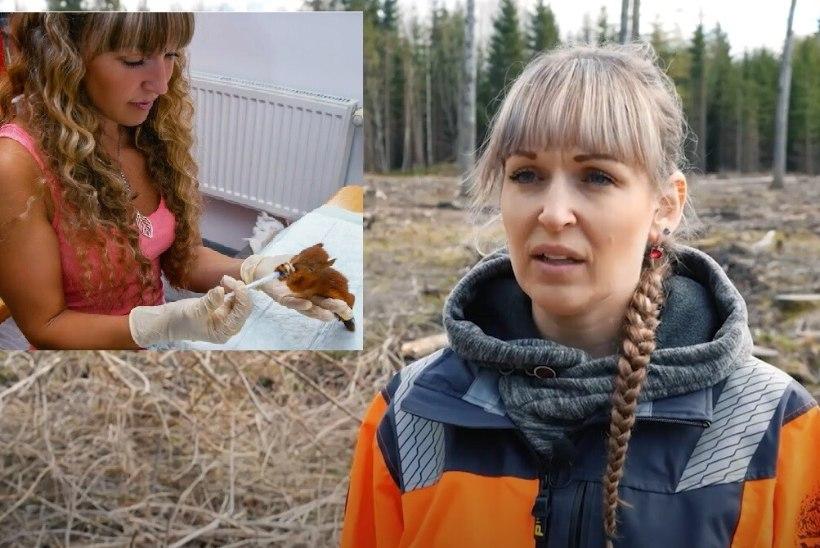 Raierahu rikkumine tapab loodust! Igal kevadel hukkub kümneid tuhandeid linnu- ja loomapoegi: see on õudne, mis Eestis toimub!