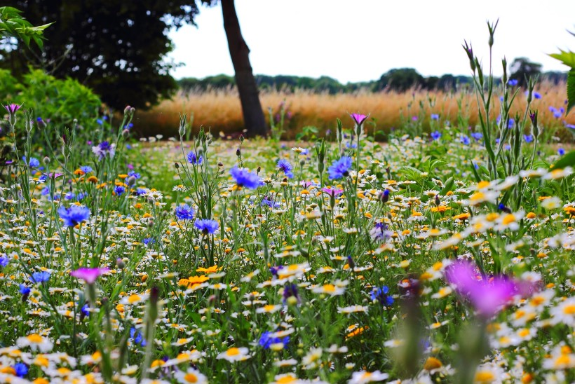 AIATÖÖD   Mais tuleb istutada, külvata ja väetada, et nautida suvel lilleilu ja saagirikkust