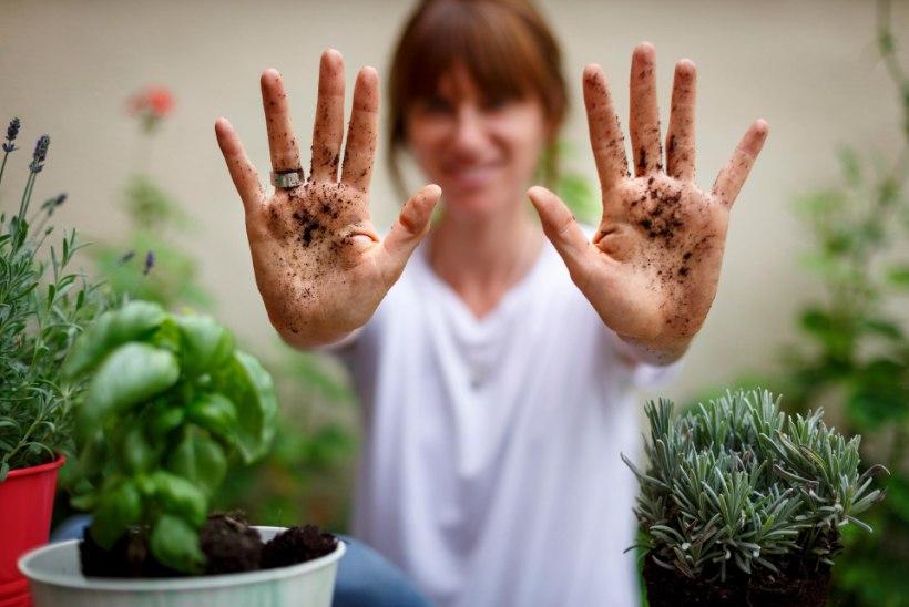 PISIKUD TEEVAD HAIGEKS! Need on olukorrad, kus käte pesemine on elulise tähtsusega