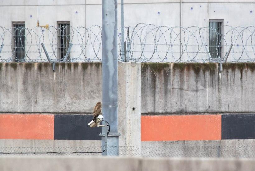 ENDINE VANG: homoseksuaalne kinnipeetav võib ohustada vangla julgeolekut oma tagumikuga!