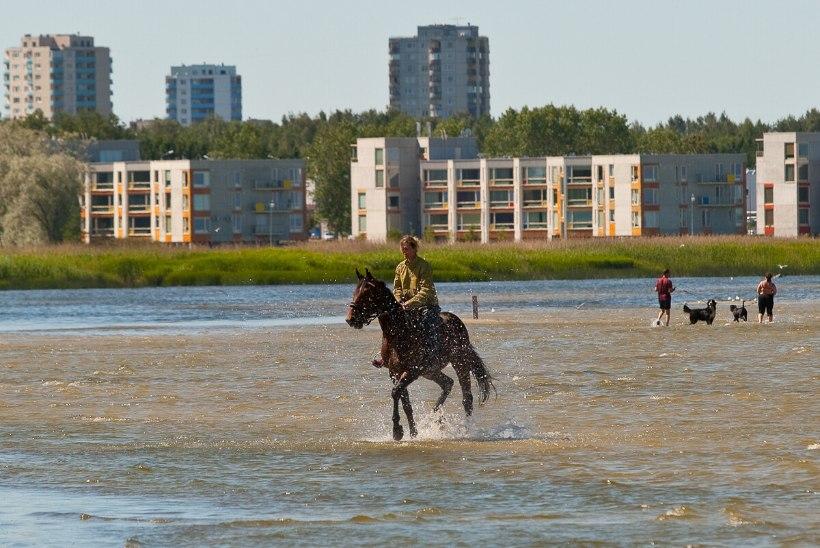 SÜÜDLASED LEITUD?! Linnaosavanem teab, kuidas Stroomi rannaveest fekaalibaktereid vähemaks saada
