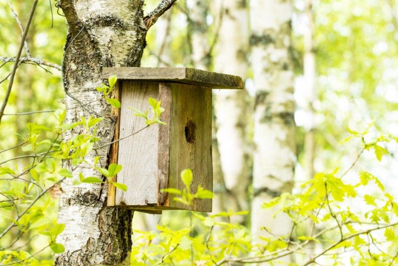 Kärbsenäpid: väikesed vilkad putukapüüdjad
