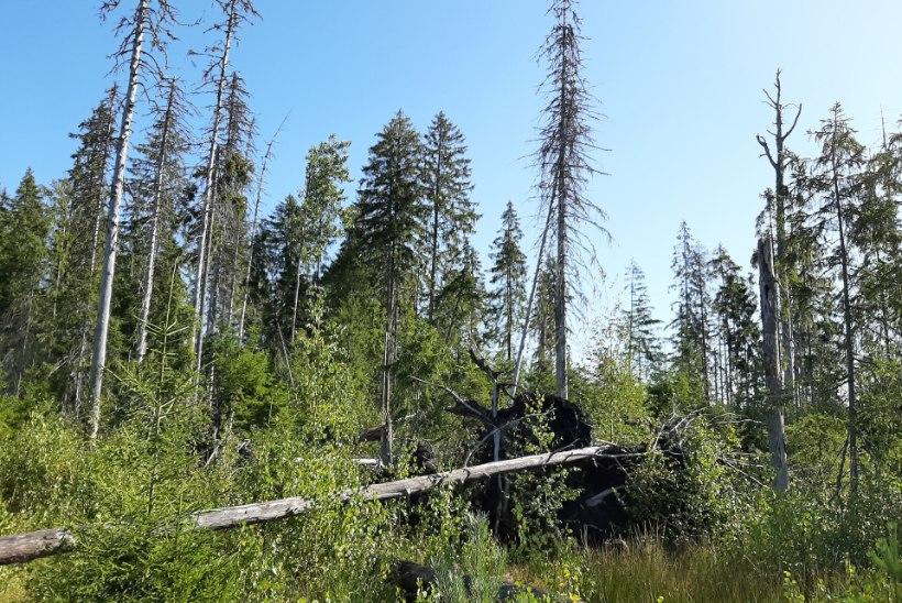 Puud tulevad ja lähevad, mets jääb