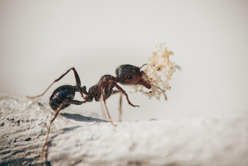 Naistelehe kodu-uudised: põnevad viisid, kuidas purke enne ringlusse viimist kasutada ja kuidas tõrjuda sipelgaid?