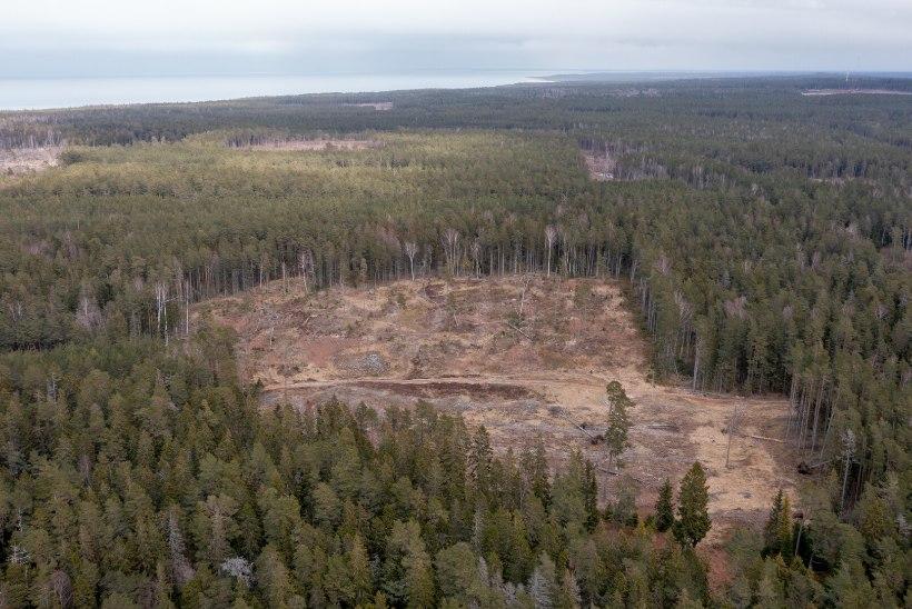 BLOGI   Mis saab Eesti metsadest? Toompeal tutvustati uut arengukava