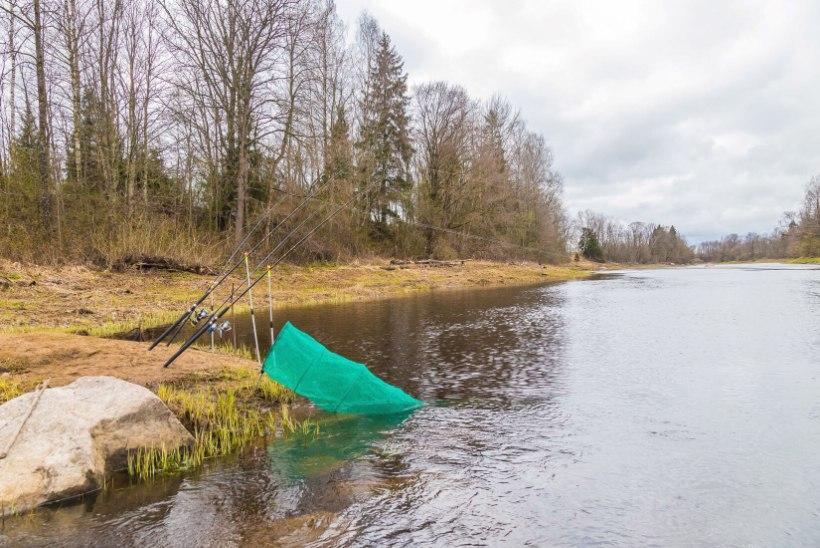 Euroopa Liit valmistub keelustama plii kasutamist kalastuses