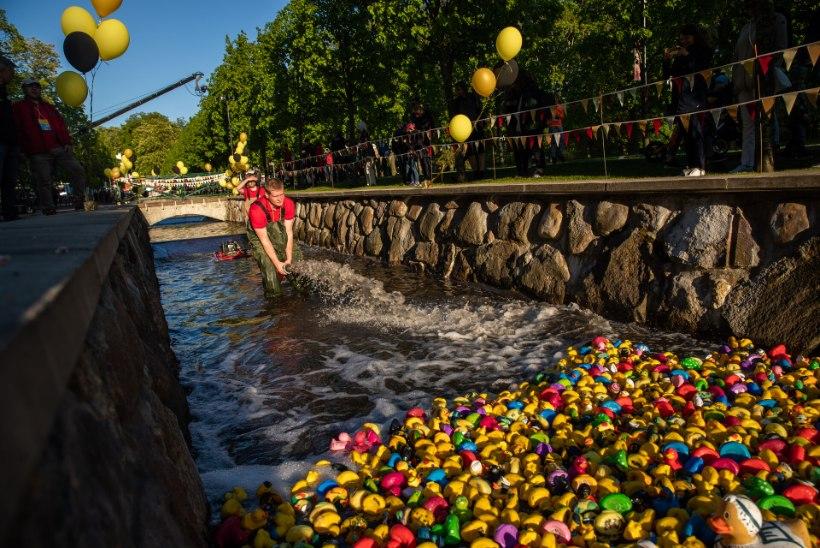 VIDEO JA GALERII | Pardirallil lasti vannilelud võistlustulle! Vaata, kui tundeküllane on pardi kohtumine presidendiga