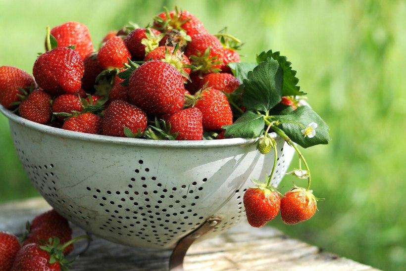 NÄDALAMENÜÜ | 28. juuni – 4. juuli: kuidas maasikaid argitoitudes rohkem kasutada